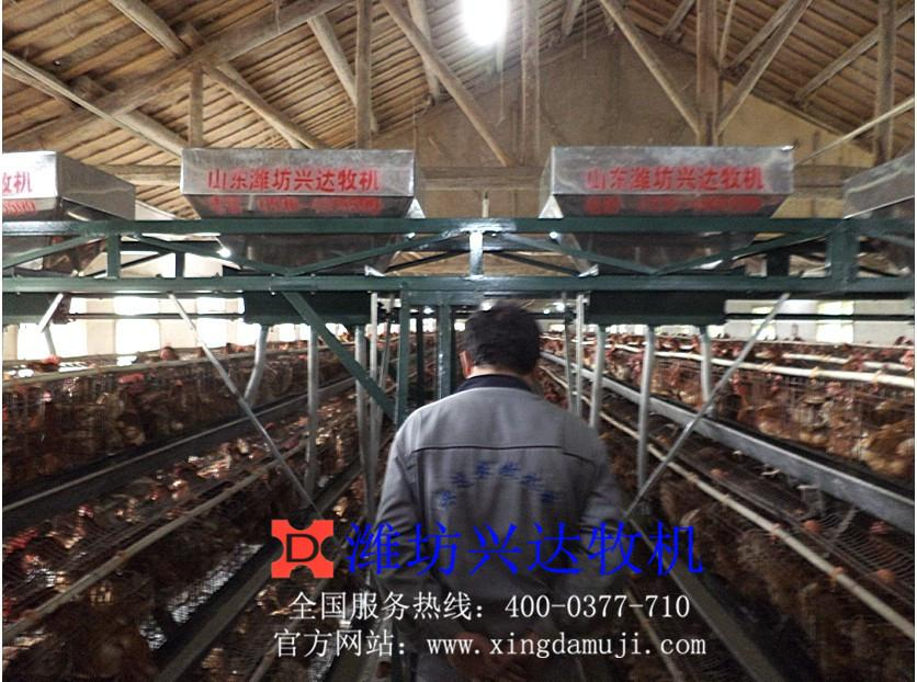 蛋鸡自动喂料机-全自动蛋鸡养殖设备