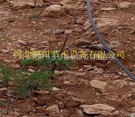 良心打造衡阳县果树滴灌|滴灌过滤器设备