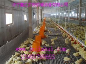 鸡用水线,鸡用自动供水线设计安装