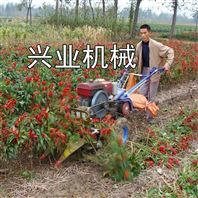 兴业牌小麦水稻收割机 茴香割晒机 牧草收割机厂家