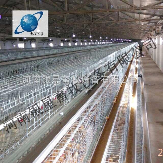 河南育雏笼优质厂家丨周口优质育雏鸡笼售后【河南银星】