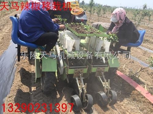 2ZQ-高效插秧機, 全自動辣椒移栽機盡在樂陵天馬機械