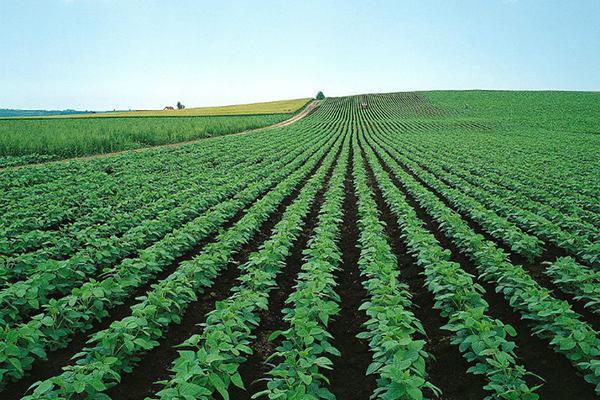 农业部今日召开玉米种植结构调整新闻发布会